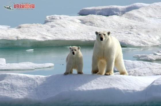 중국이 북극항로 개척에 열을 올리고 있다. [사진: MYPSD.COM.CN)