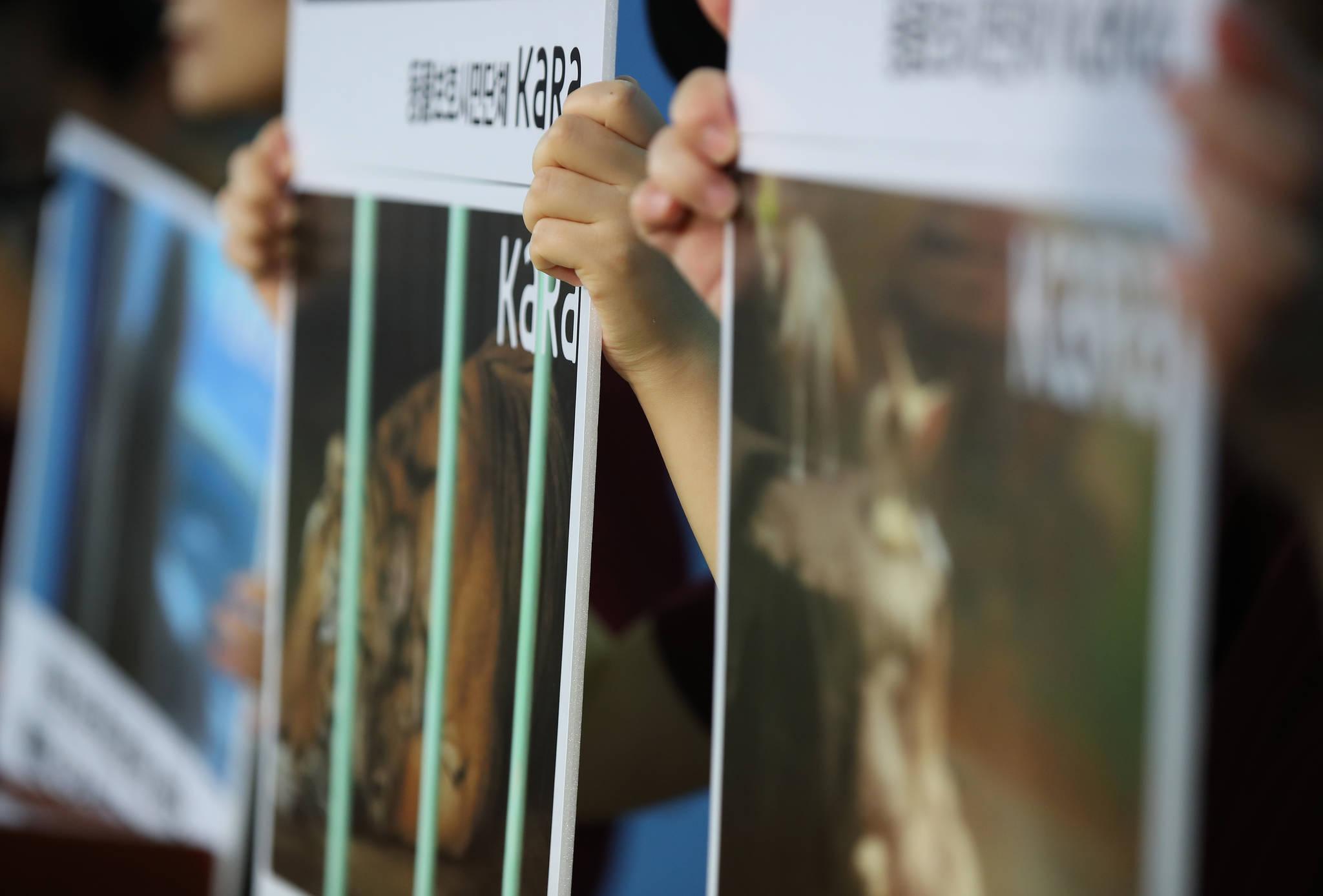 동물보호단체 '카라' 관계자들이 지난 8월 16일 오전 국회 정론관에서 기자회견을 열고 전시동물원에서 벗어나 동물들의 처우 개선을 위한 생태동물원을 통해 인간과 동물들의 공존과 상호존중 풍토 조성을 촉구했다.[연합뉴스]