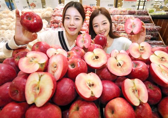 항산화 성분 15배 '속 빨간 사과'