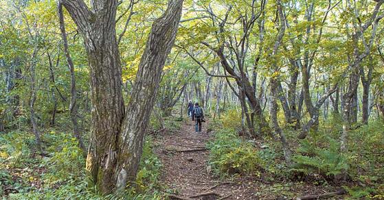 능경봉 오르는 길. 백두대간 품 속이어서 숲이 깊다.