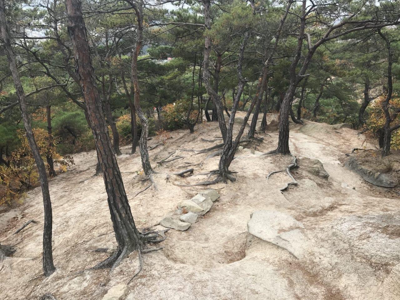 북한산국립공원의 탐방로. 등산객들의 발길에 토양이 침식되고 나무 뿌리가 드러났다. 북한산은 탐방로로 잘게 쪼개져 조각 하나의 면적이 0.28㎢에 불과한 것으로 나타났다.