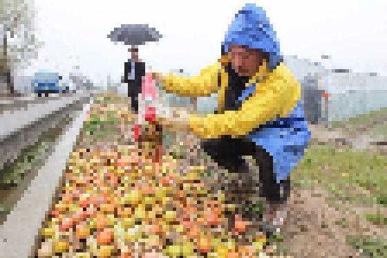 (사진은 기사와 무관) 지난해 중금속 오염으로 폐기된 농작물이 107t에 달하는 것으로 나타났다. [중앙포토]