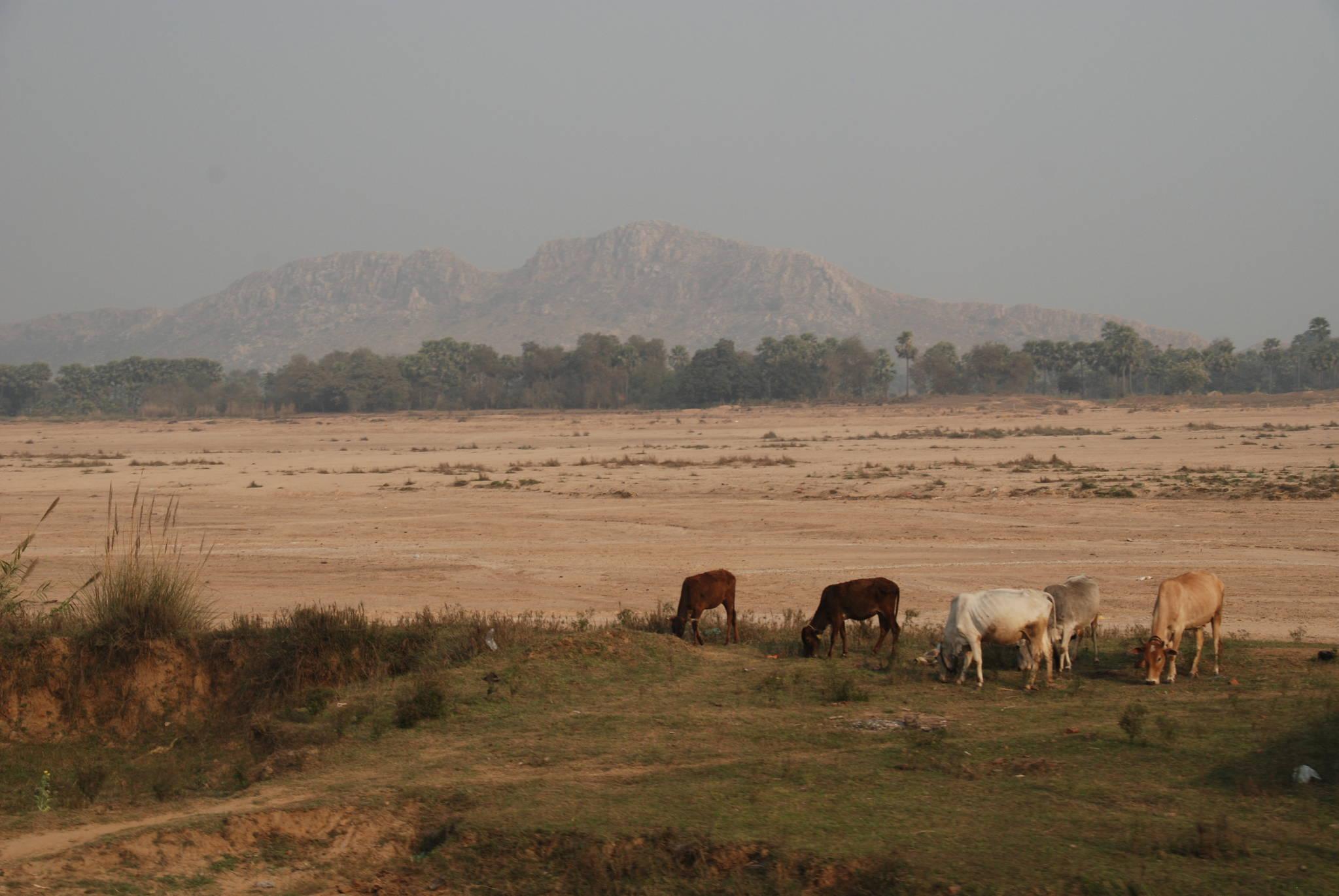 인도 보드가야의 네란자라 강. 건너편에 싯다르타가 수행했다는 동굴이 있는 바위산이 보인다. 백성호 기자