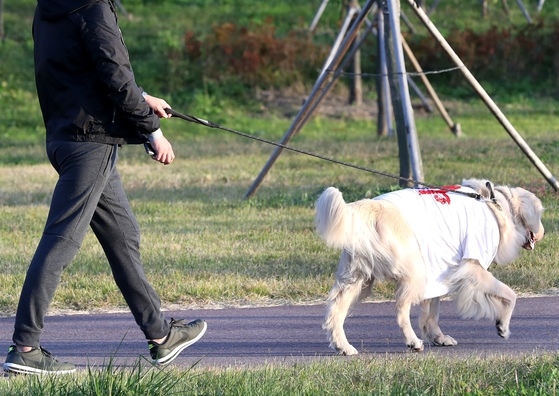 지난달 22일 시민이 반려견과 함께 한강시민공원을 산책하고 있다. [중앙포토]