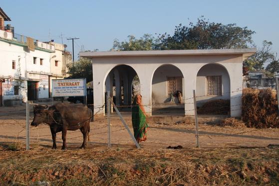 수자타 마을의 정경. 인도의 여느 시골마을과 큰 차이는 없었다. 이곳에서 머지 않은 거리에 싯다르타가 수행한 바위산이 있다. 백성호 기자