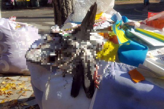 서울 강서구 가양동의 한 아파트 단지 앞에 버려진 비둘기 사체. 비둘기는 몸통이 사라진 채 가죽과 다리만 남아 있었다. [뉴스1]