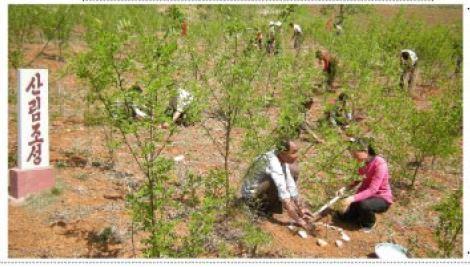 노동신문이 올해 봄철에 전국적으로 10여만 정보의 면적에 이깔나무(잎갈나무), 잣나무 등 수억 그루의 나무를 심었다고 전했다. 나무심기를 하고 있는 북한주민들 [사진 노동신문]