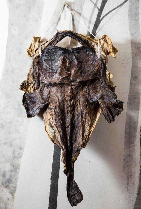 마산아구찜은 마른 아귀를 불려서 만든다. 마른 아귀로 처음 찜을 만들어 팔았다는 '혹부리 할매'의 며느리 김삼연씨가 운영하는 '오동동아구할매집' 벽에 마른 아귀가 걸려있다. [중앙포토]
