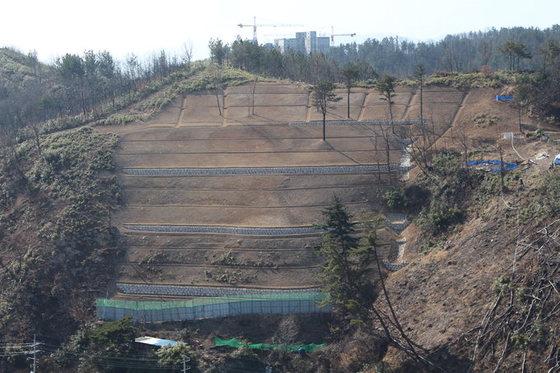 지진 여파로 땅밀림 현상이 발생한 경북 포항시 북구 용흥동 한 야산. [사진 포항시]