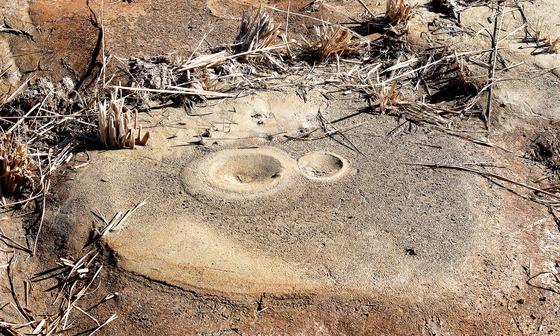 19일 포항시 흥해읍 망천리 인근 논에 액상화 현상으로 모래 분출구가 형성돼 있다. [프리랜서 공정식]