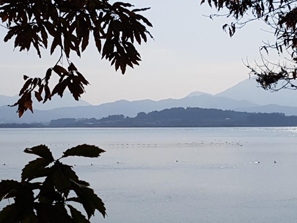 고병원성 AI가 확진된 오리 농가 인근에 있는 '철새도래지' 동림저수지 모습. 물닭·청둥오리로 추정되는 철새들이 물 위에서 무리를 지어 다니고 있다. 고창=김준희 기자