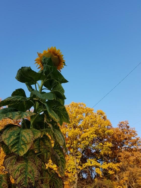 가을이 깊어가고 있다.