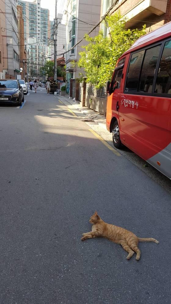 골목길 한복판에 길고양이가 누워 있다. [사진 독자 제보]