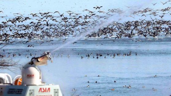 지난 21일 국내 최대 철새도래지 충남 서천 금강하구둑 일대에서 축협 관계자들이 방역차량을 이용해 소독작업을 하고 있다. 중앙포토