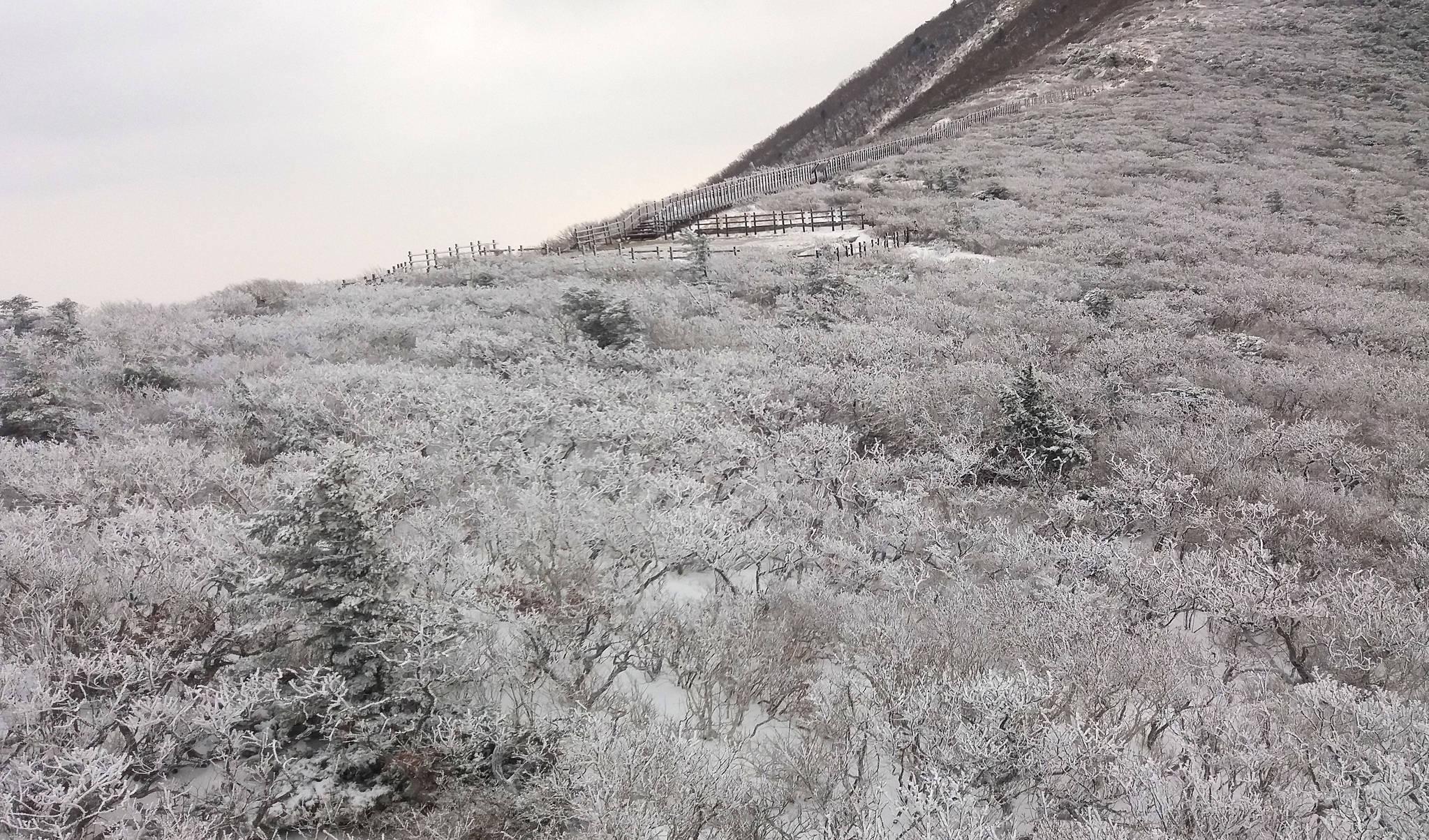 26일 강원 속초시 중청대피소에서 바라본 설악산 국립공원이 밤새 내린 눈으로 상고대가 활짝 펴 절경을 이루고 있다. [설악산국립공원사무소=연합뉴스]