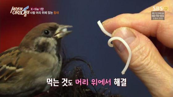 [SBS 방송 화면 캡처]