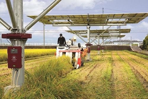 일본 나라현 텐리시의 한 농가에 설치한 파루의 '태양광 이모작 트래커'. [사진 파루]