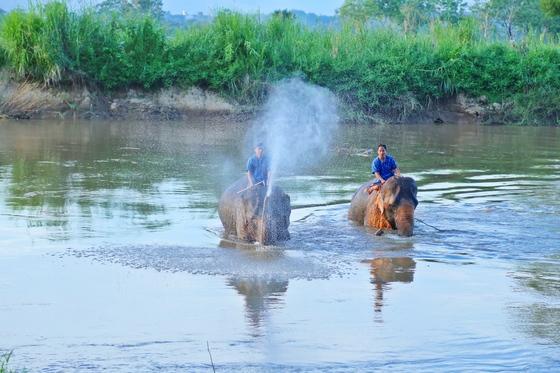 코끼리들이 가장 좋아하는 목욕 시간.