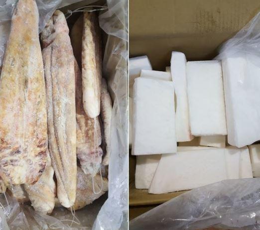 수입이 금지된 상어 내장(왼쪽)과 정상 수입 신고된 개복치 살. [사진 부산세관 제공]