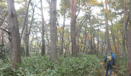 영실코스의 시작은 숲길이다. [사진 하만윤]