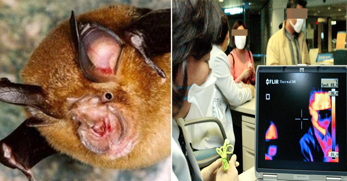 사스 바이러스 병원균 발견된 중국 박쥐(좌)와 2003년 열화상 적외선 감지기를 이용한 입국자 체온을 검사하는 모습(우) [성도일보 캡처·중앙포토]