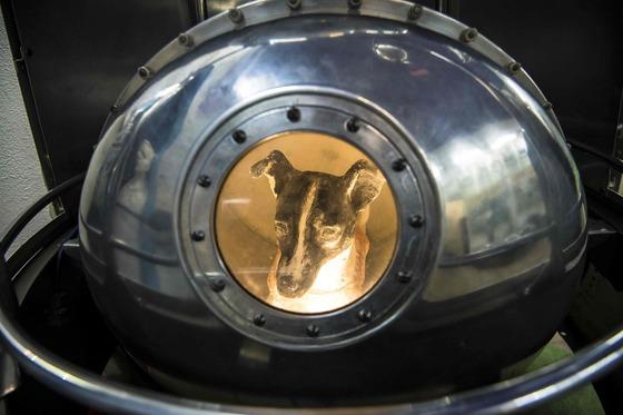 모스크바 항공우주박물관에 전시된 라이카와 스푸트니크 2호 모형. 모스크바 거리를 떠돌던 유기견 라이카는 1957년 인간에 앞서 최초로 우주로 향한 지구생명체다.[AFP=연합뉴스]
