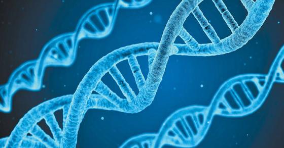 DNA의 모습을 묘사한 이미지. [픽사베이]