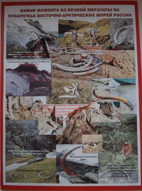 러시아 매머드 발굴 현장(야쿠츠크 영구동토박물관 게시 사진) 강찬수 기자