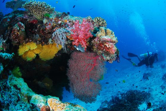 시밀란의 바닷속 산호초. [사진 박동훈]