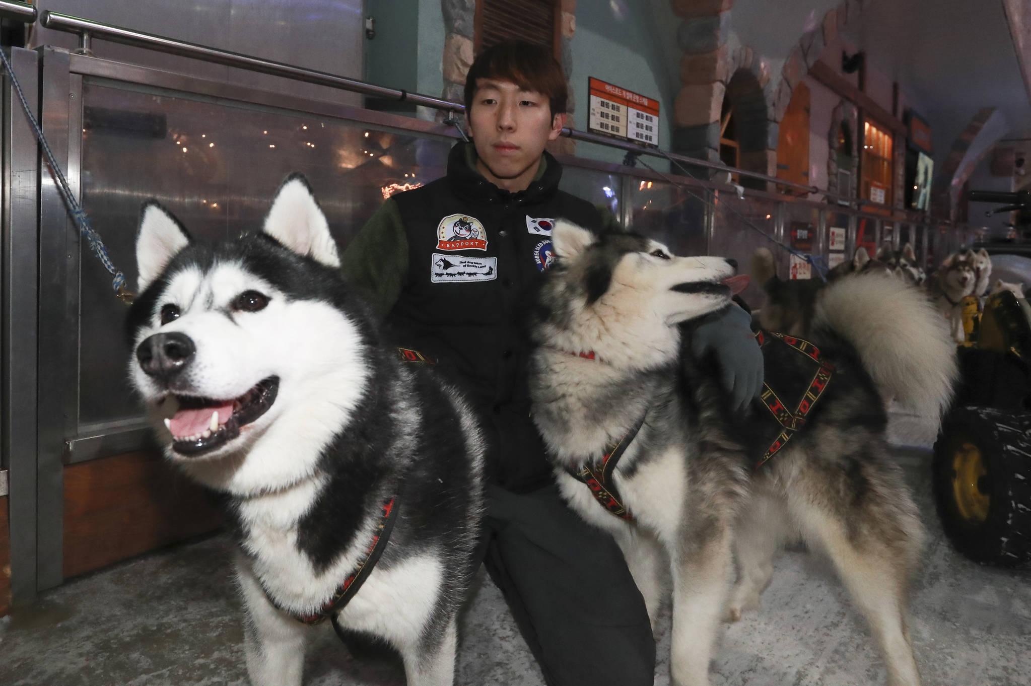 남기정 머셔(Musher.썰매를 끄는 사람)가 11일 경기도 일산 원마운트 스노우파크에서 달리기를 마친 개들을 안아주고 있다. 임현동 기자