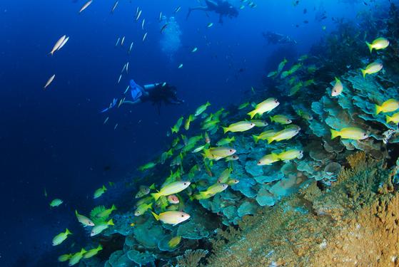 태국 바다는 긴 시야 덕에 늘 물고기떼를 만날 수 있다. [사진 박동훈]