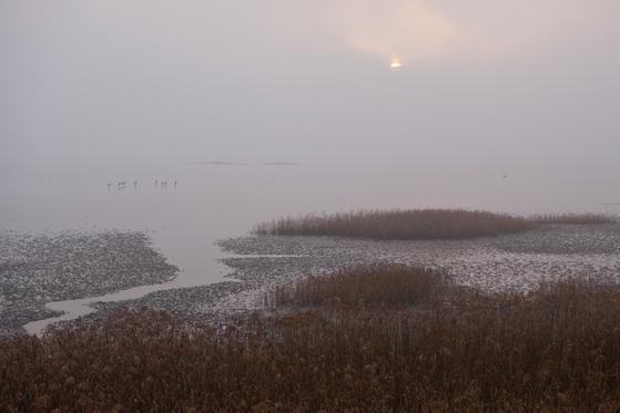근사한 일출을 기다렸지만 9시가 돼서야 해가 빼꼼 얼굴을 내밀었다. 갯벌에는 겨울 철새가 먹이를 조아먹고 있었다.