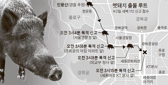 지난 4월 2일 서울 광화문에 나타낸 멧돼지의 출몰 루트 [중앙포토]
