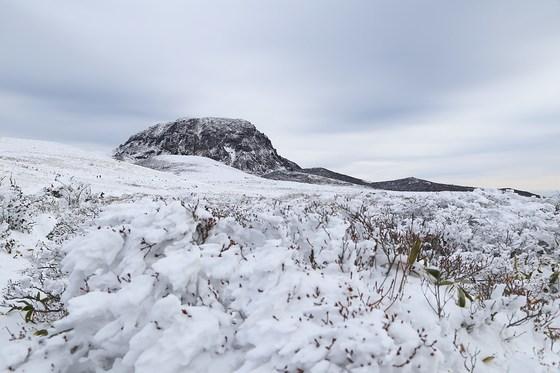 겨울 한라산의 문턱은 의외로 낮다. 등산 초보도 영실 코스를 따라 오르면 분화벽을 눈에 담을 수 있다. [양보라 기자]