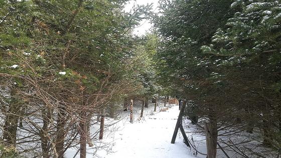 구상나무 터널을 지나면 주목나무 군락지와 천동삼거리에 도달한다. [사진 하만윤]