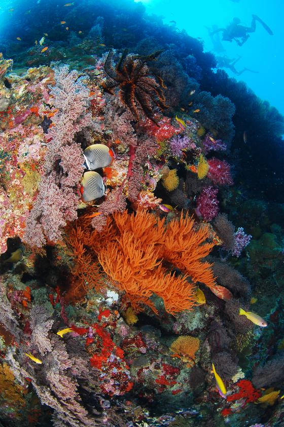 도처에 산재해 있는 아름다운 수중비경이 다이버들을 활홀하게 한다. [사진 박동훈]
