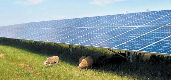 한화그룹의 태양광 부문은 글로벌 선도기업의 위상을 강화하고 있다. 한화큐셀은 8GW의 셀과 모듈 생산량을 갖췄다. 셀 기준 세계 1위다. 다결정 모듈 효율 세계 1위도 했다. 사진은 독일 작센안할트주에 한화큐셀이 설치한 태양광 발전소. [사진 한화그룹]