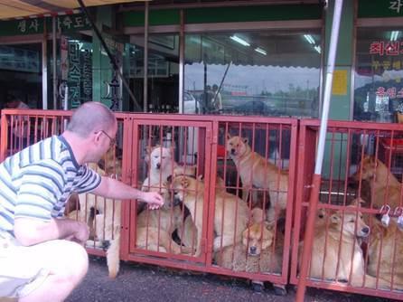 개 시장의 모습 [중앙포토]