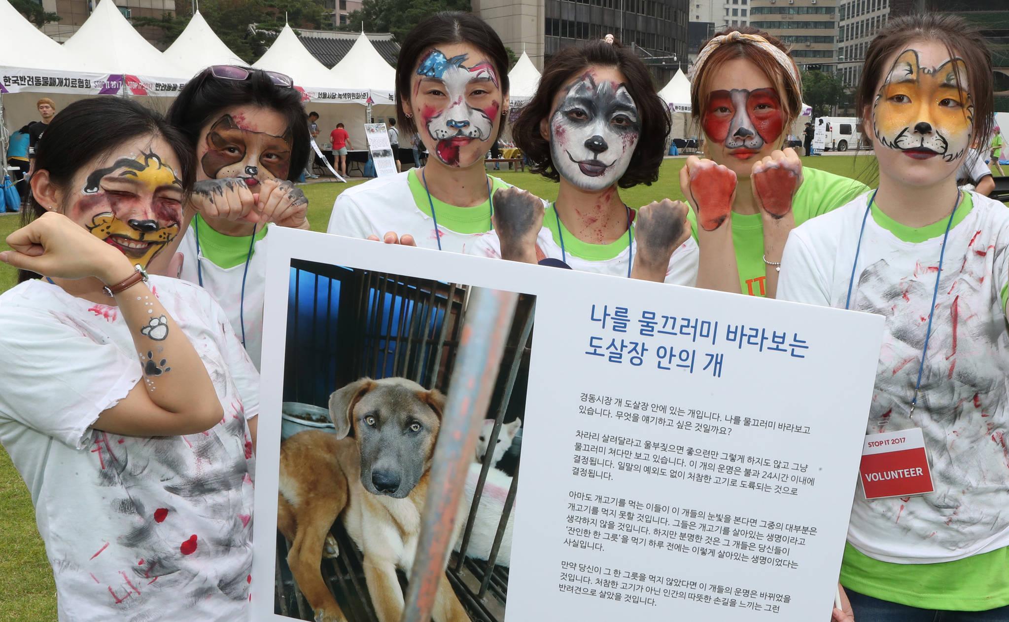 지난 7월 서울광장에서 '케어' 등 35개 동물권익단체 회원들이 개와 고양이 분장을 한 채 보신탕을 먹지 말자는 캠페인을 진행하고 있다. 김춘식 기자