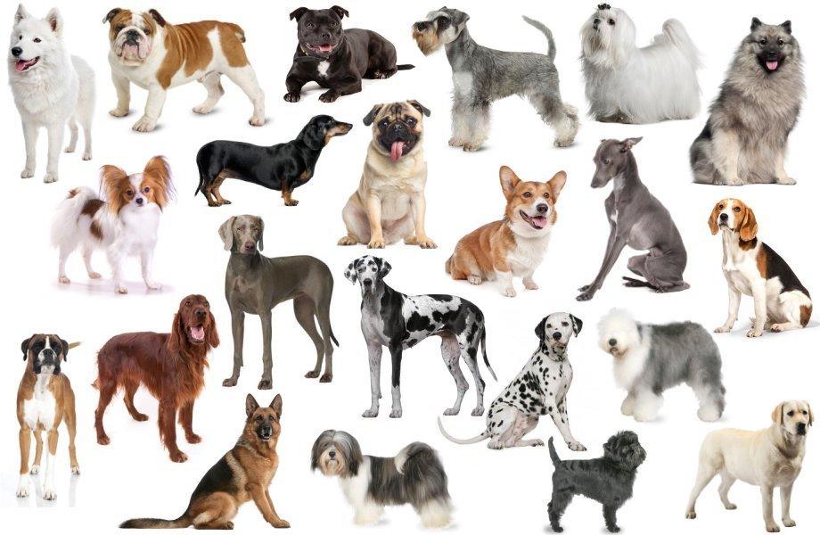 다양한 품종의 개들 [중앙포토]