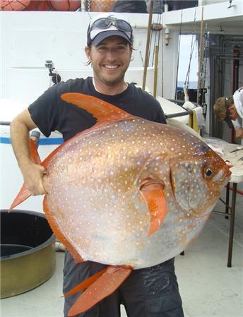 최초로 발견된 온혈 물고기인 빨간개복치 [중앙포토]