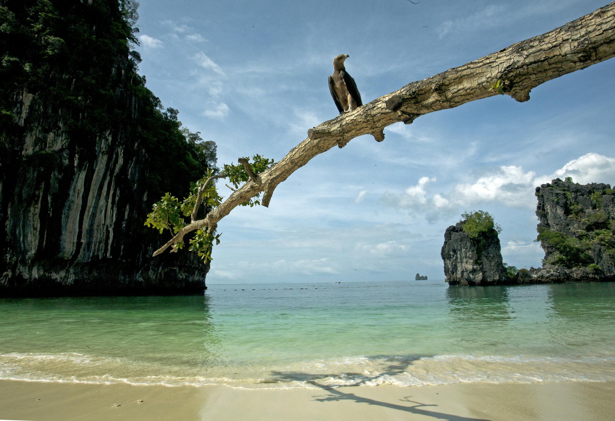 태국 크라비 꼬홍 해변. [중앙포토]