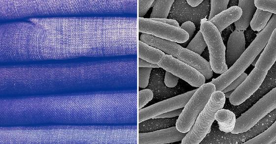 대장균으로 청바지 염색을 가능케하는 기술이 개발됐다. [중앙포토]