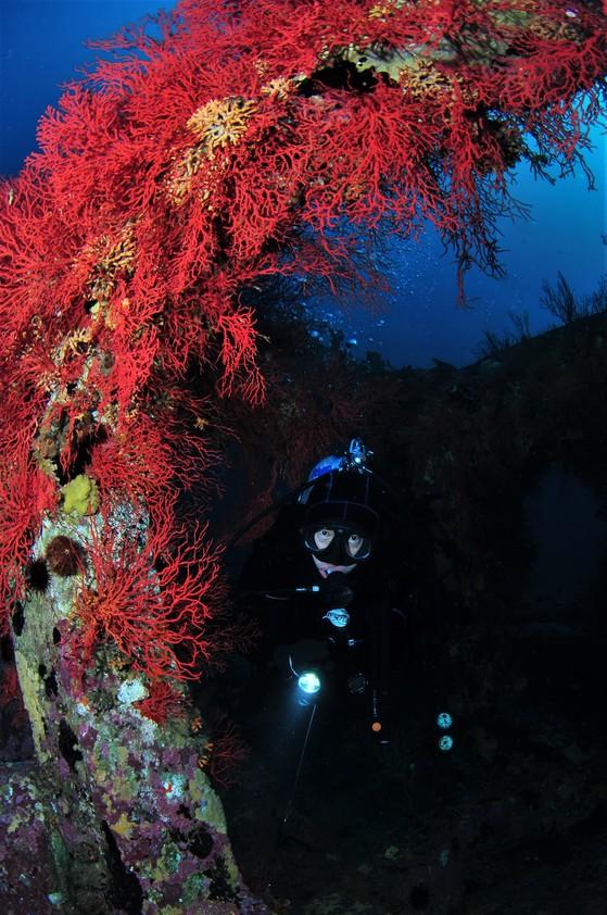 사각어초 속으로 다이버가 들어가서 산호를 구경하고 있다. [사진 박동훈]