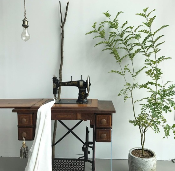 식물 옆에 빈티지 소품이나 가구를 함께 놓는 것도 아름다운 초록 공간을 만드는 방법이다. [사진 슬로우 파마씨]