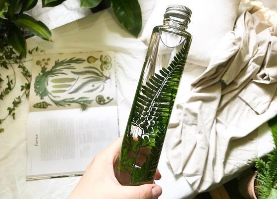 식물을 잘 키울 자신이 없다면 보존액에 담긴 식물 몇 개를 창가나 책상에 올려놓아도 그린 인테리어가 완성된다. [사진 슬로우 파마씨]