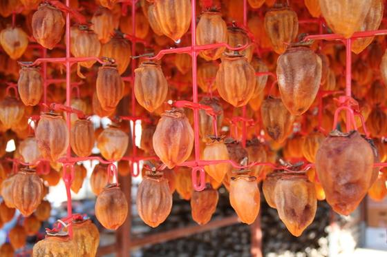 함안 곶감 농가인 파수식품 건조대에 걸려 있는 함안 곶감 모습. 위성욱 기자