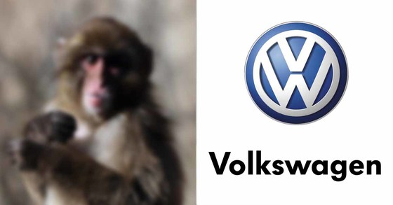 독일 자동차업체 폴크스바겐(VW)이 원숭이들을 가두어놓고 가스 실험을 한 것으로 밝혀져 비난을 받고 있다. [중앙포토]