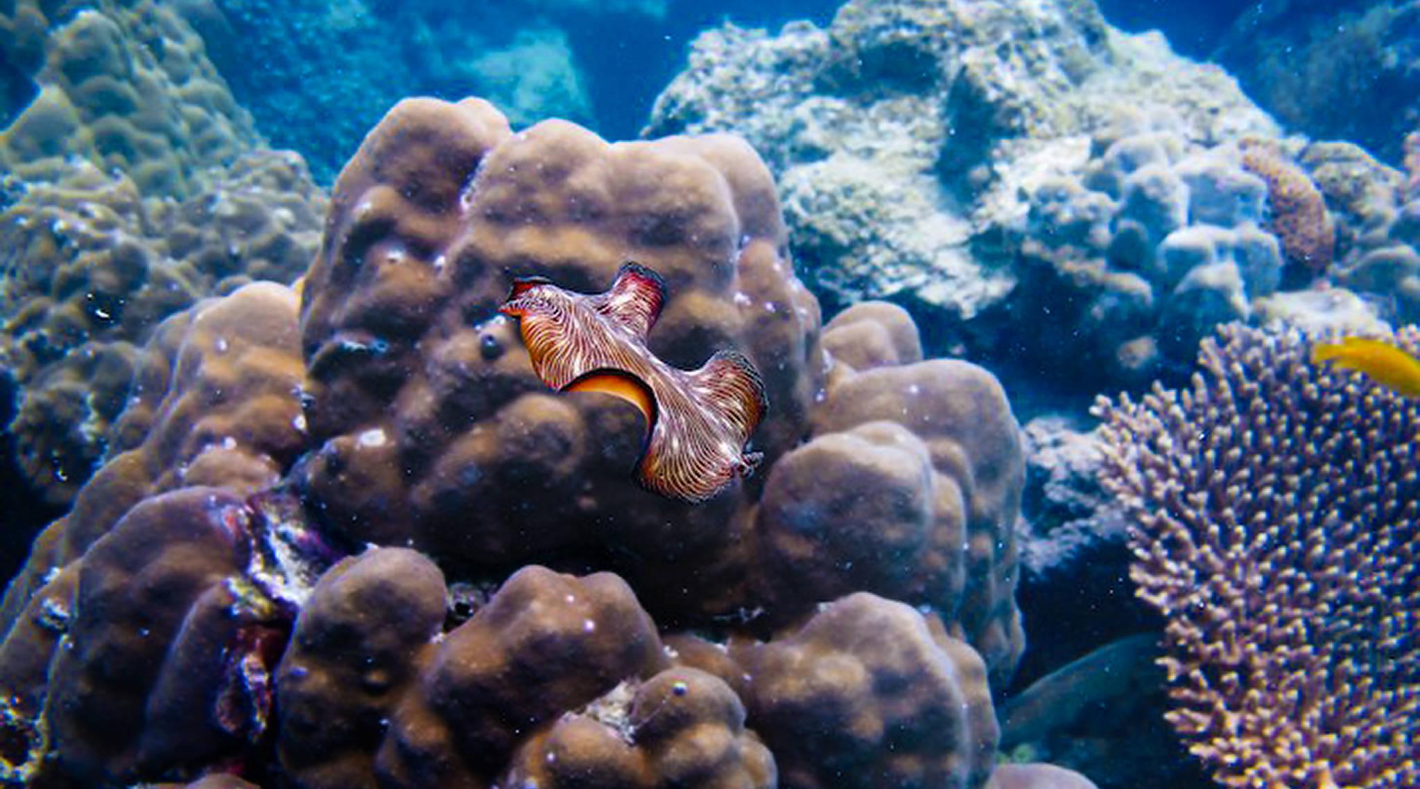 코타오 앞바다에는 신기한 해양생물이 많이 산다. [사진 태국관광청]