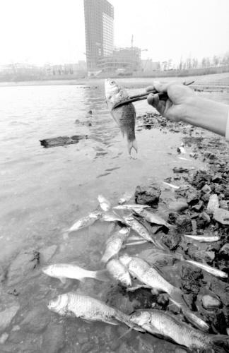 1987년 4월 수질오염으로 인해 서울 잠실 석촌호수의 물고기들이 떼죽음을 당했다. [중앙포토]